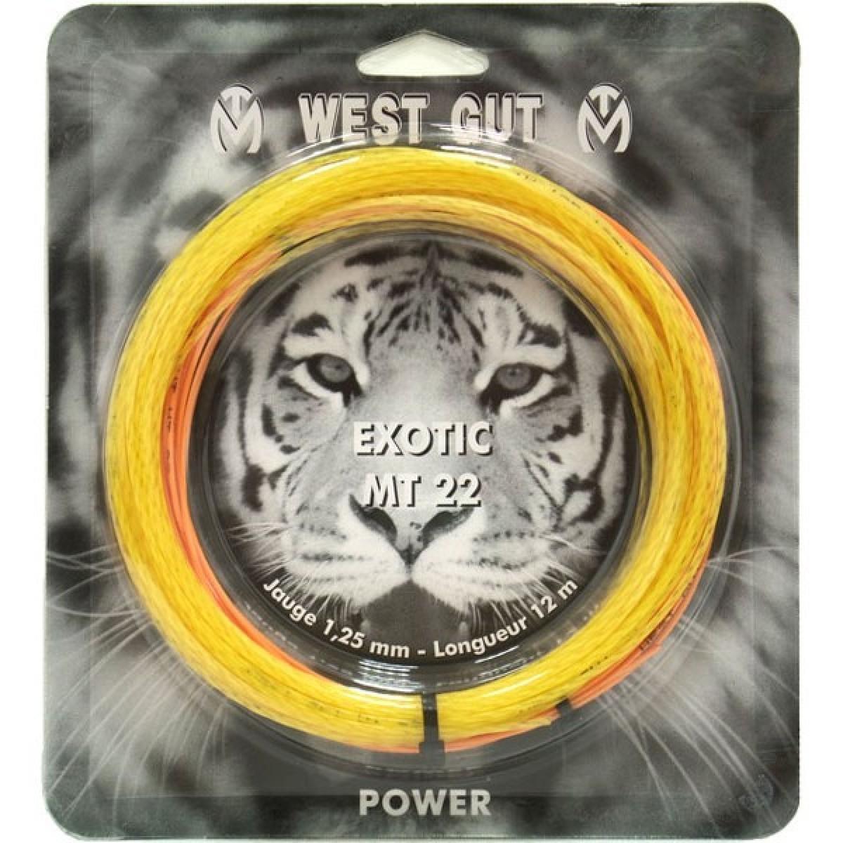 CORDAGE DE TENNIS WEST GUT MT22 GOLD (GARNITURE - 12M)